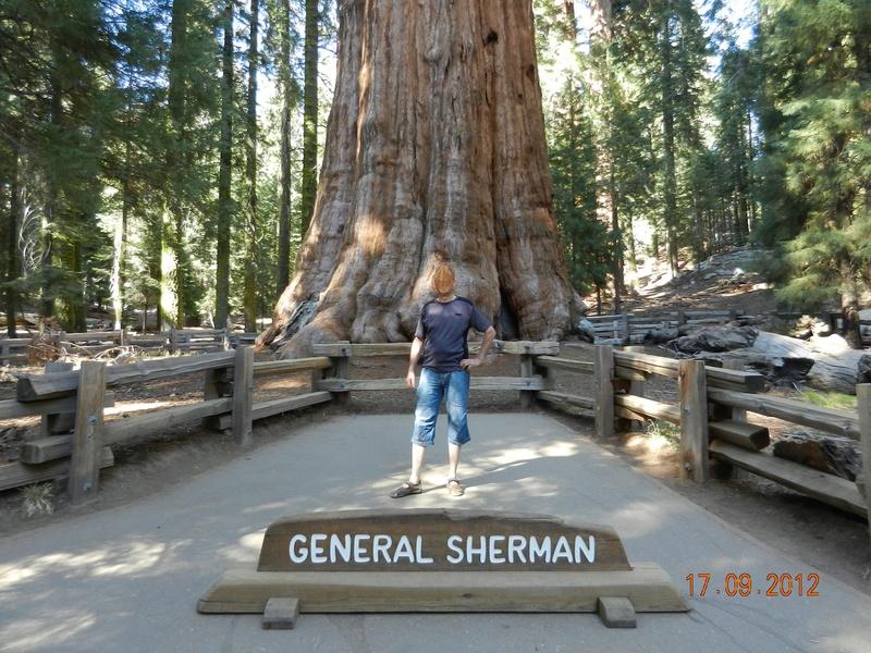 Mammutbäume: Sequoia, Sequoiadendron, Metasequoia - Seite 8 Inkedd11