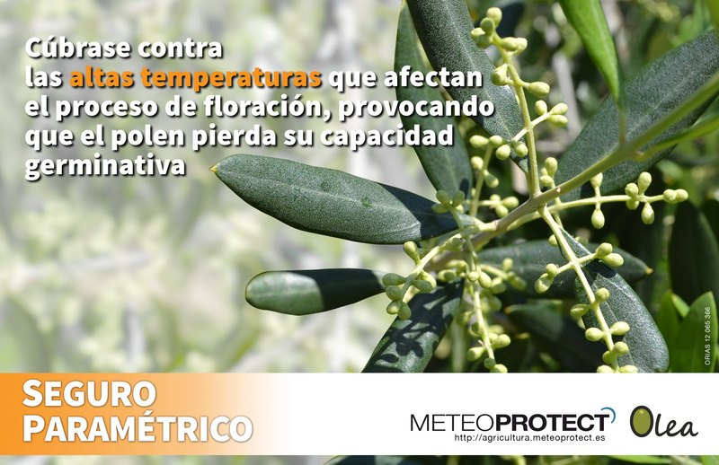 Seguro Paramétrico Artef-10