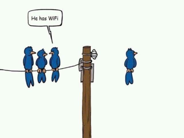 Votre humour de zèbre Drdix410