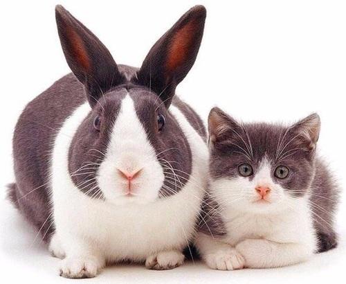 صورة جميلة جدا Rabbit10