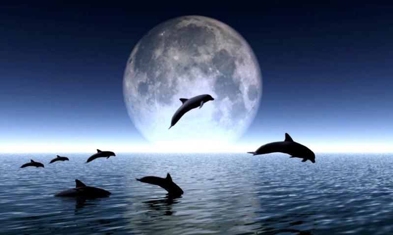IMAGENES DE DELFINES Delfin11
