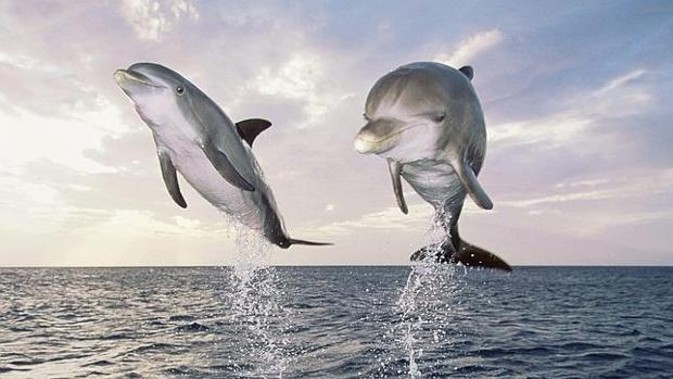 IMAGENES DE DELFINES Delfin12