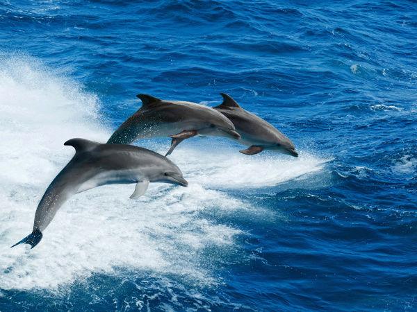 IMAGENES DE DELFINES Delfin13
