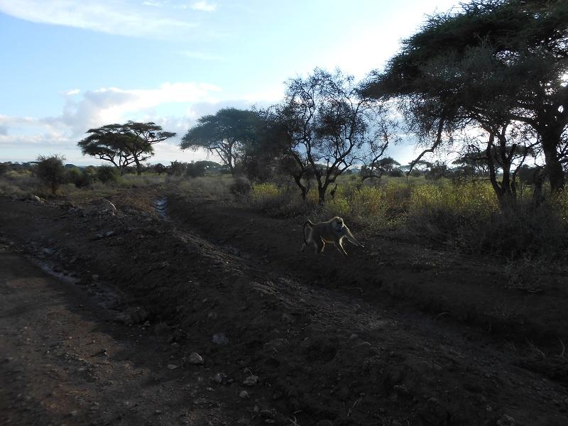 photos du kenya  - Page 4 Dscn1711