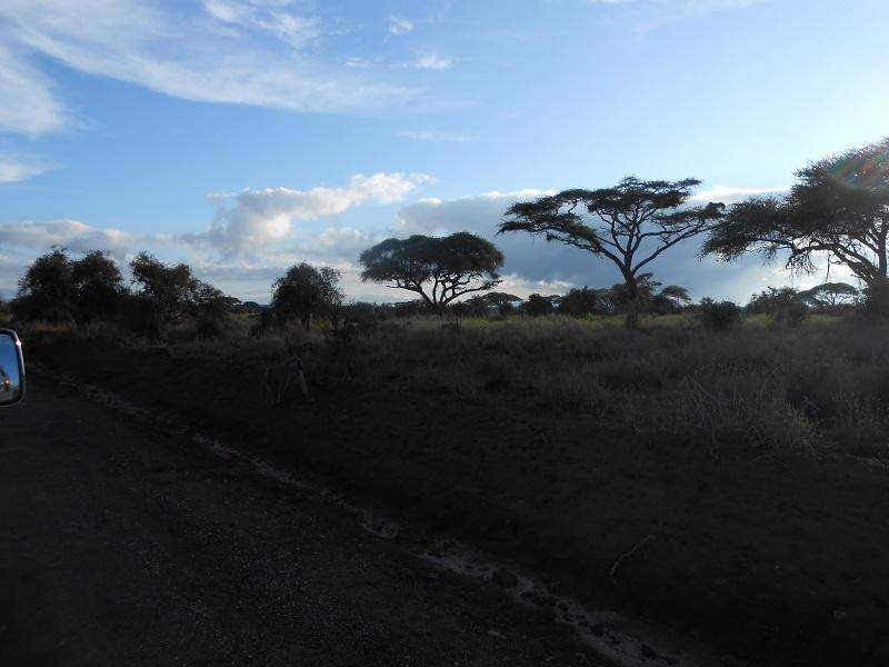 photos du kenya  - Page 4 Dscn1713