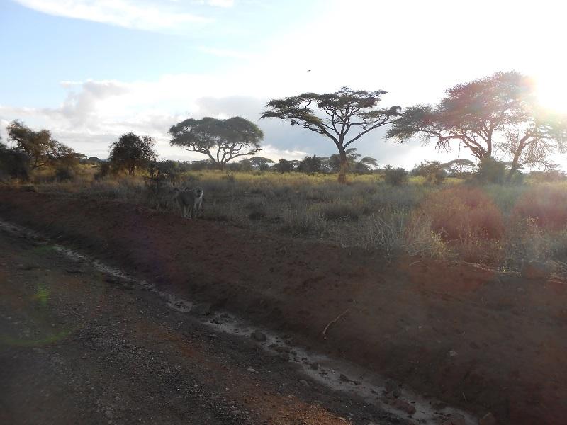photos du kenya  - Page 4 Dscn1714