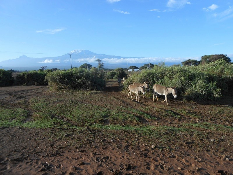 photos du kenya  - Page 4 Dscn1718