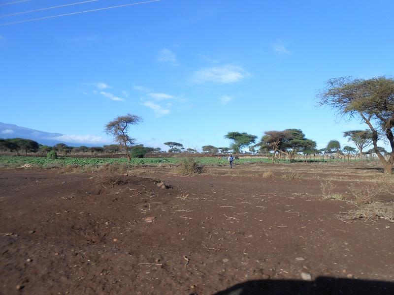 photos du kenya  - Page 4 Dscn1818