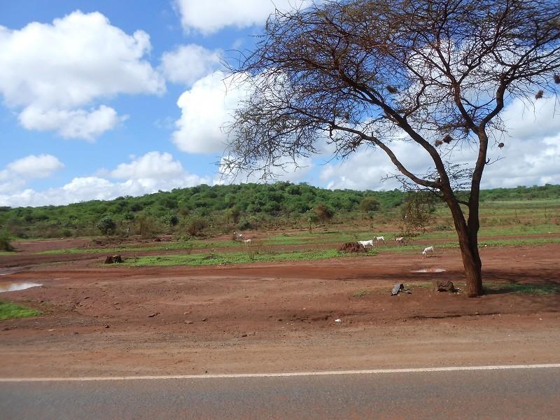 photos du kenya  - Page 4 Dscn1856
