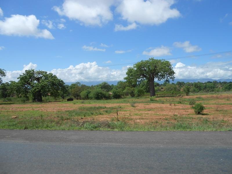photos du kenya  - Page 4 Dscn1871