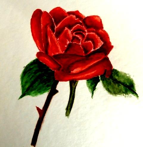 Pour vous mes amies 1_rose11
