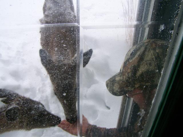 Petting a deer 2009ho10