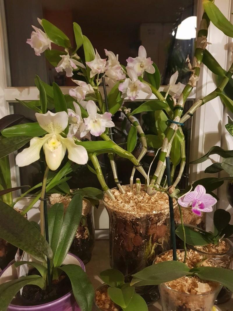Orchideen in Glasvasen 7 (SGK) - Seite 5 Img-2015