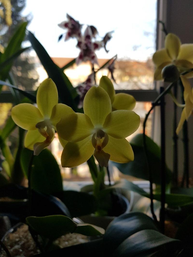 Orchideen in Glasvasen 7 (SGK) - Seite 5 Img-2016