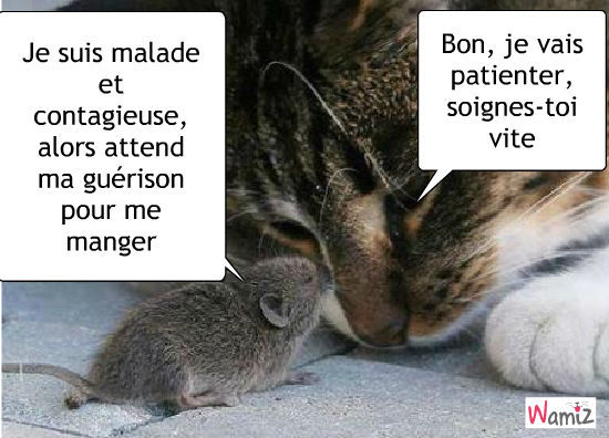 [Jeu] Association d'images - Page 5 Lechat10