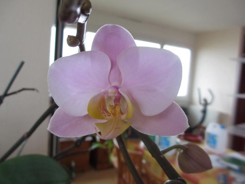 Une orchidée a identifier Img_1213