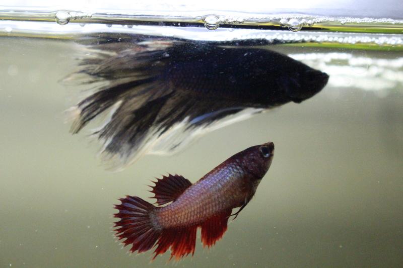 FishStick Guimauve  Img_0914