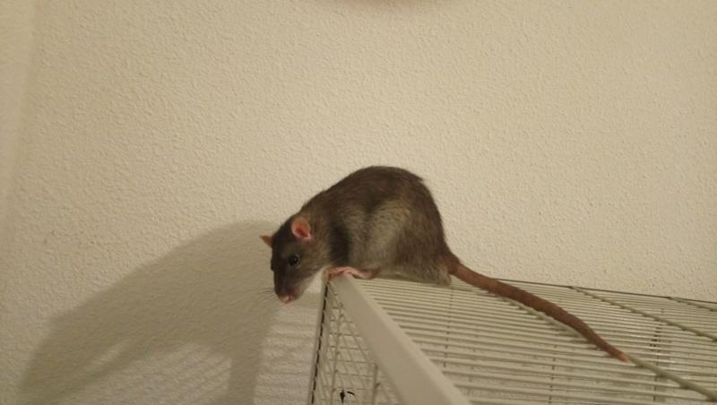 Les rondeurs ratounesques Dsc_0010