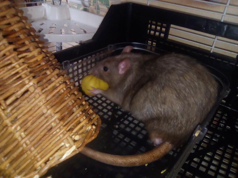 Les rondeurs ratounesques Img_2013