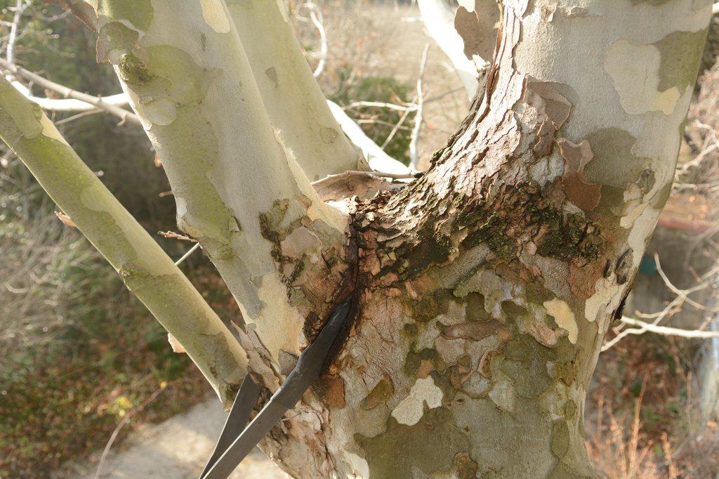 Une cabane dans l'arbre - Page 2 Dsc_7526