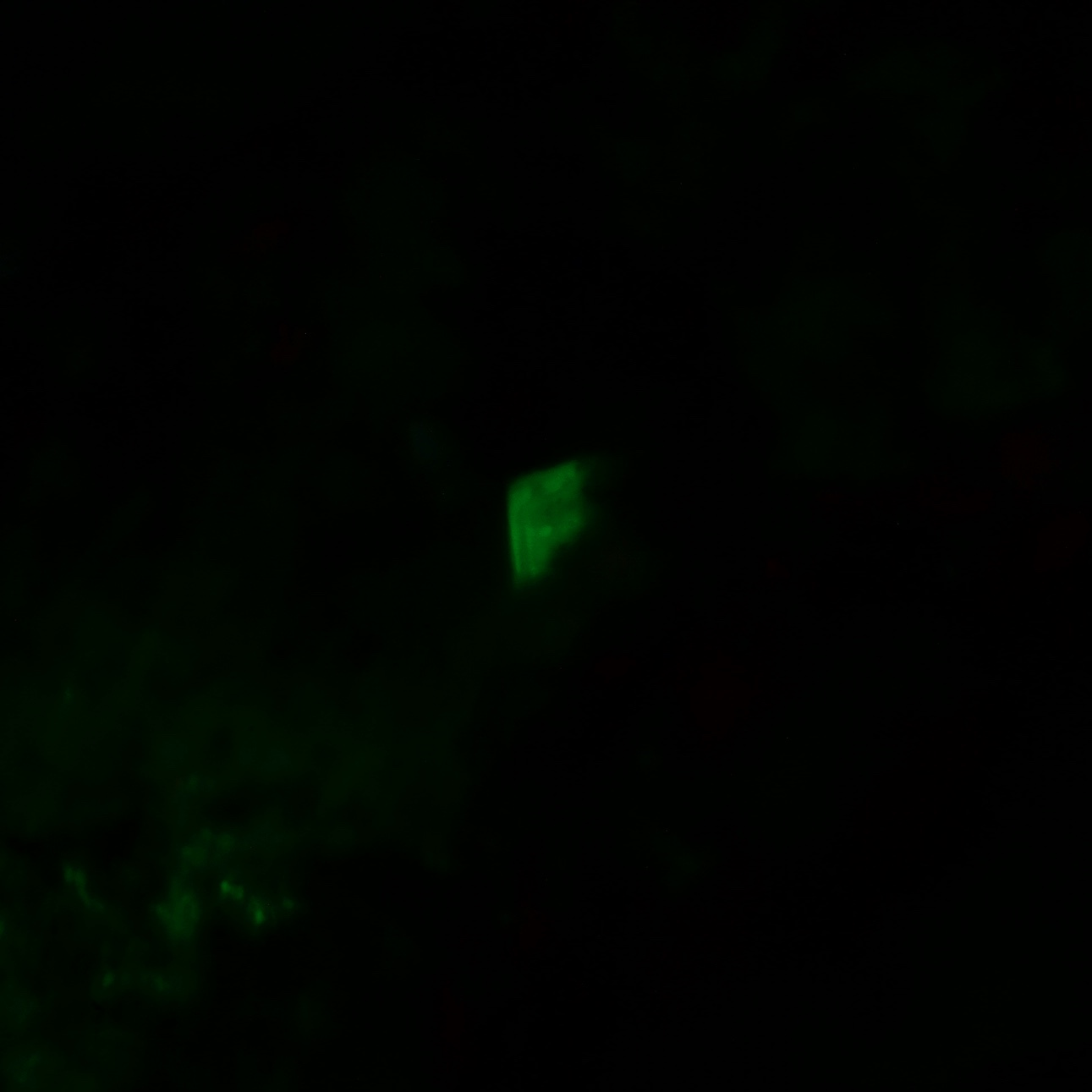 Colección de Minerales Fluorescentes - Página 5 Fullsi66