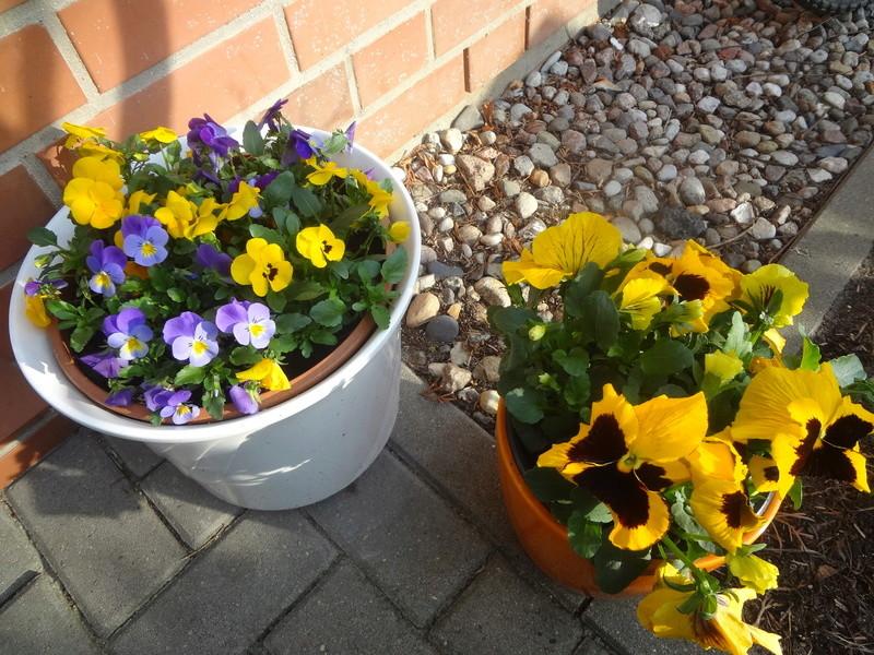 Erste Frühlingsboten im Garten und in Wald und Flur - Seite 65 Dsc07951