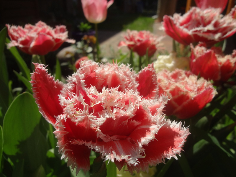 Erste Frühlingsboten im Garten und in Wald und Flur - Seite 65 Dsc08120