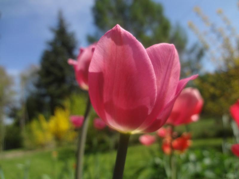Lilien(artige) -  natürlich Lilien, aber auch Inkalilien, Zeitlose, Germer und Stechwinden - Seite 12 Dsc08129