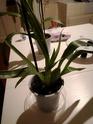 Mes petites orchidées :) Img_2036