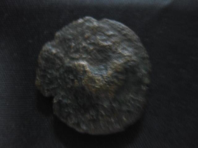 Semis de Cástulo Img_4712
