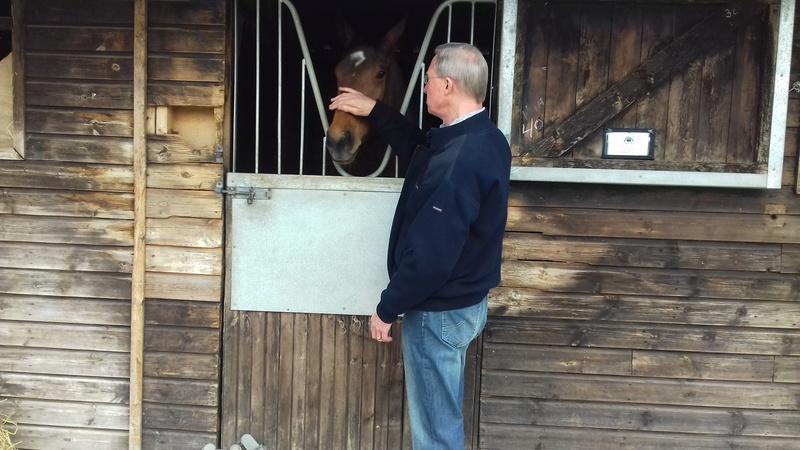 Race horses 20180412