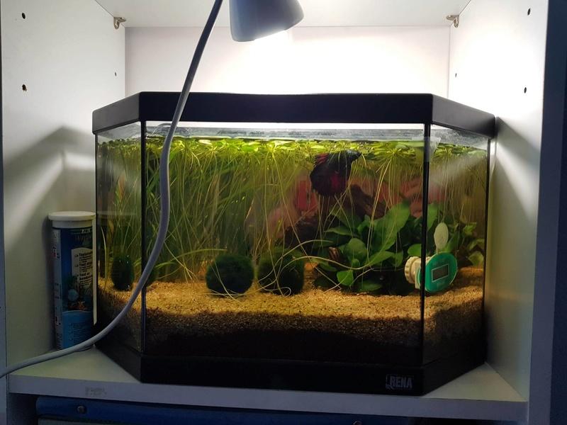 Préparation aquarium pour un futur BETTA - Page 4 22522210