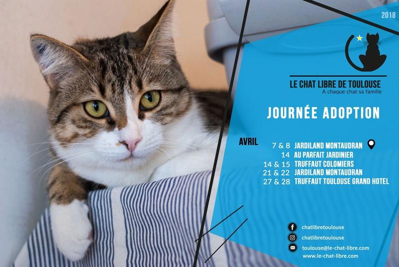 [ Adoptions ] Samedi 14 et dimanche 15 avril 2018 : Truffaut Colomiers 29744610