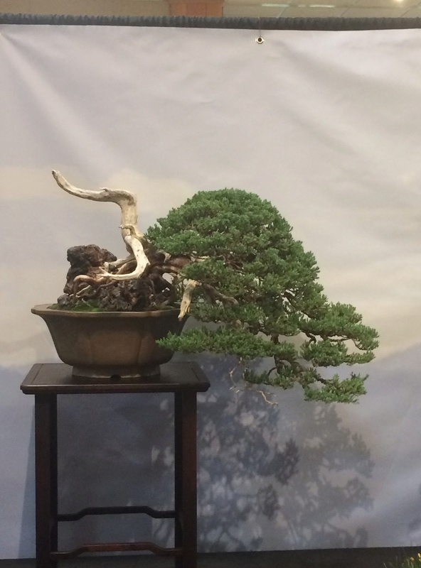 Carolina Bonsai Expo 2017 Img_3614