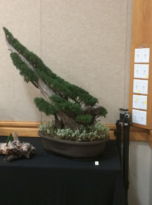 Carolina Bonsai Expo 2017 Img_3615