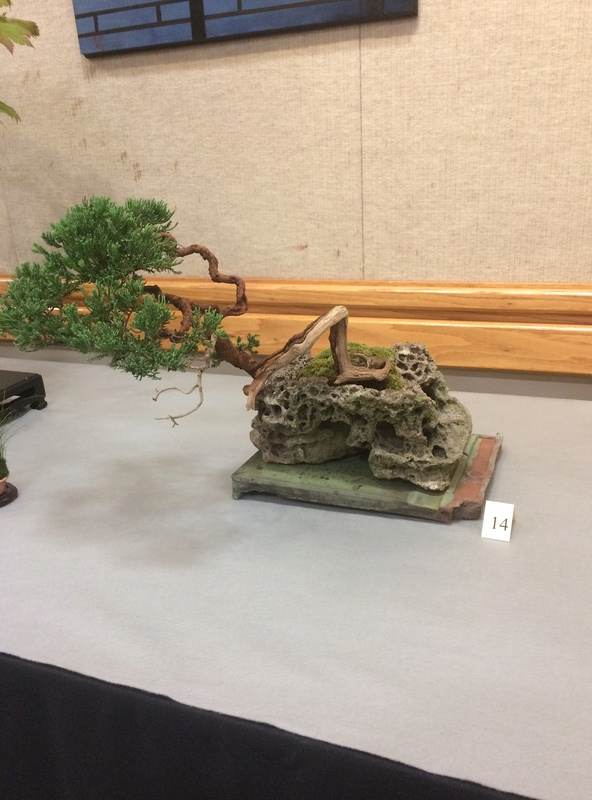 Carolina Bonsai Expo 2017 Img_3616