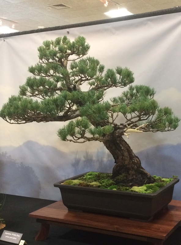 Carolina Bonsai Expo 2017 Img_3617