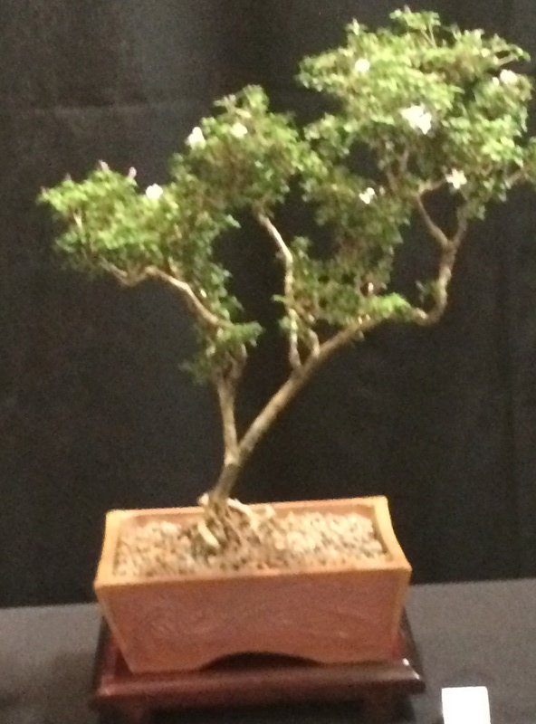 Carolina Bonsai Expo 2017 Img_3618