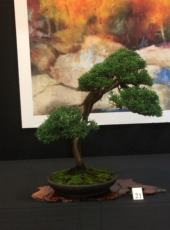 Carolina Bonsai Expo 2017 Img_3619