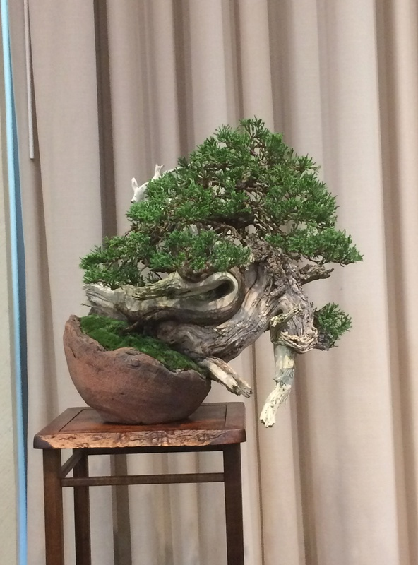 Carolina Bonsai Expo 2017 Img_3620