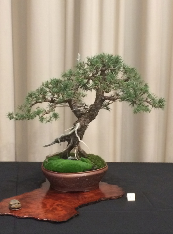 Carolina Bonsai Expo 2017 Img_3624