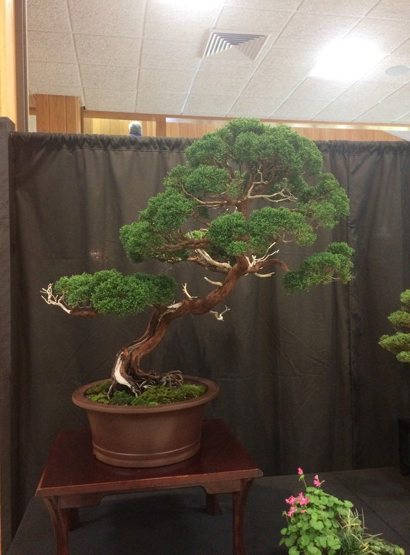 Carolina Bonsai Expo 2017 Img_3625