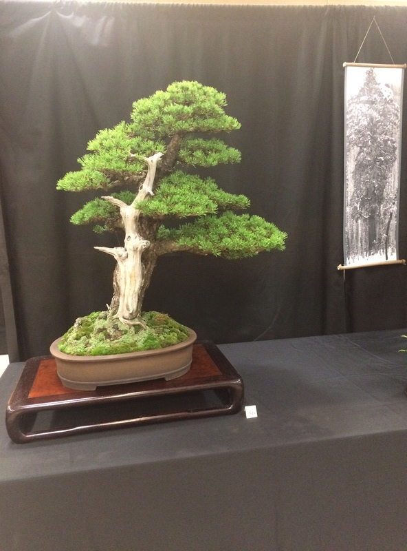 Carolina Bonsai Expo 2017 Img_3627