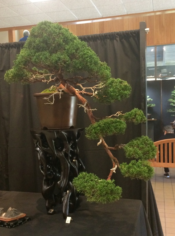 Carolina Bonsai Expo 2017 Img_3628