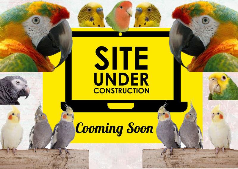 global parrot university Craft_11