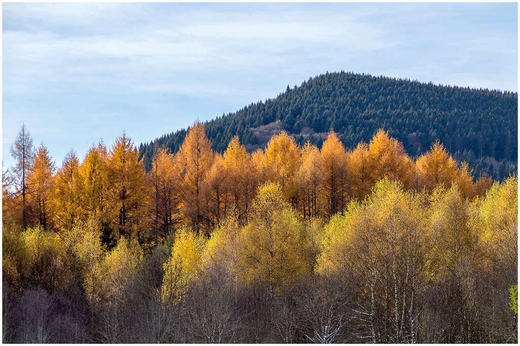 Aux couleurs de l'automne Lacham10