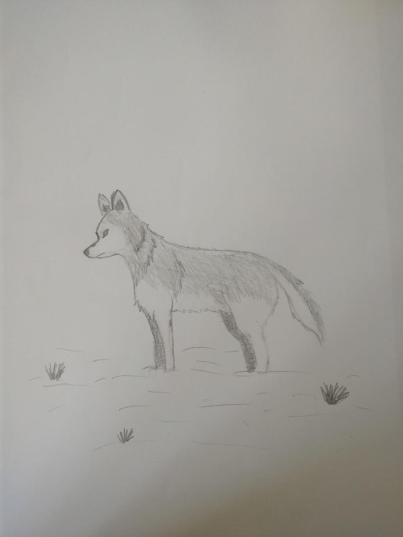 Meine Bemühungen zum Malen/Zeichnen :D Wove_l11