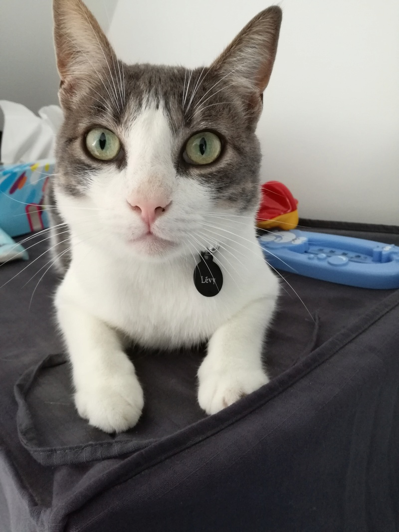 LEVY, chat européen blanc & tigré gris, né en 2015 - Page 2 Img_2010