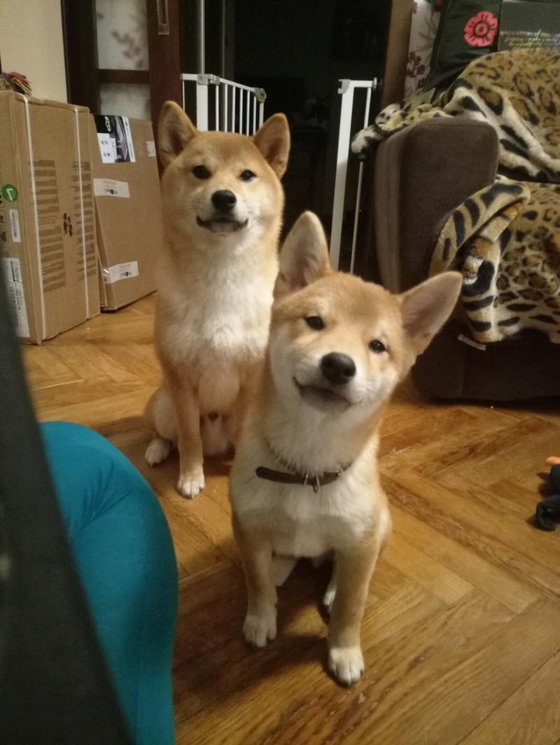Таинственная история и трусливая собака P7122010