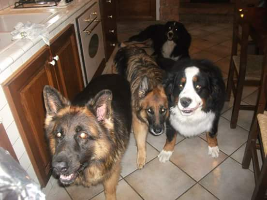 Condividete le foto dei vostri amici animali - Pagina 2 Fb_img12